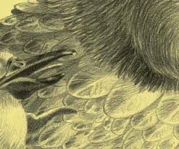 'The Middle', ilustrado por Eva Sánchez Gómez